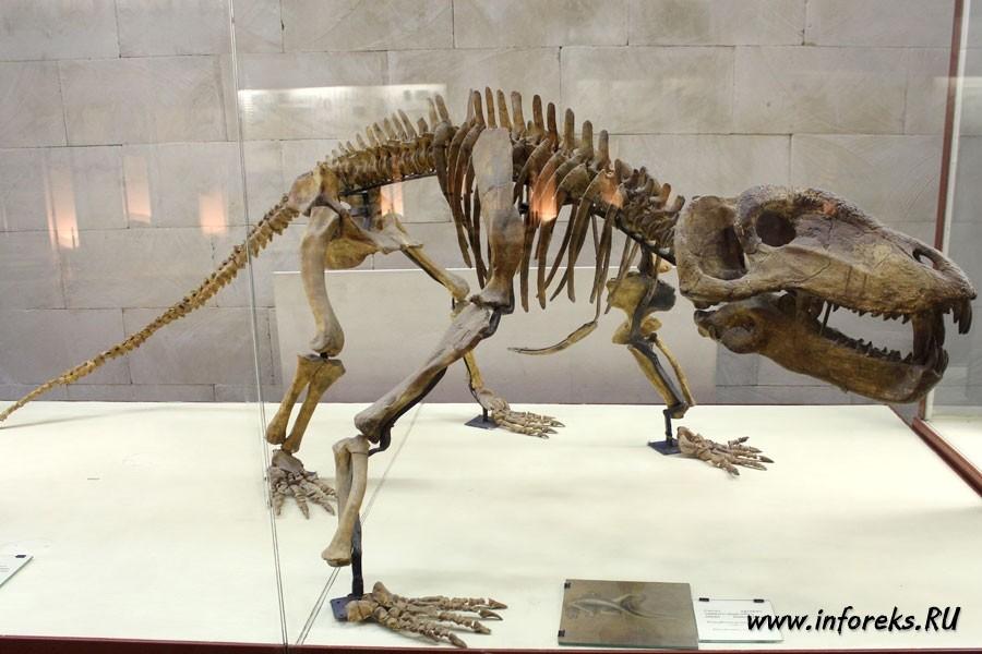 Палеонтологический музей в Москве 31