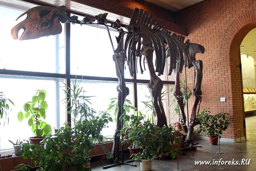 Палеонтологический музей в Москве 55