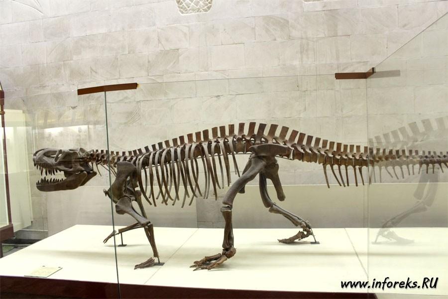 Палеонтологический музей в Москве 27