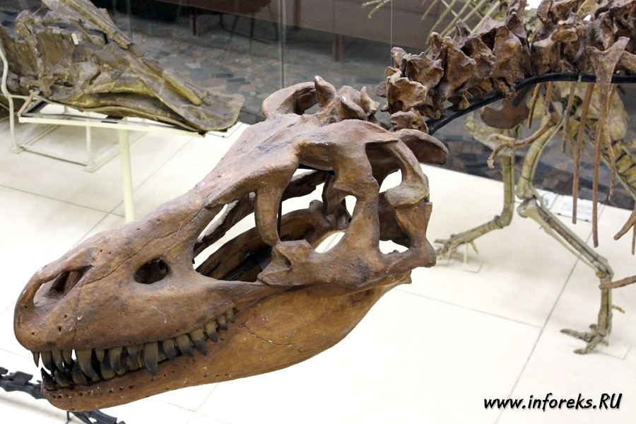 Палеонтологический музей в Москве 25