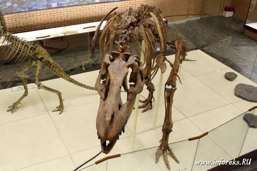 Палеонтологический музей в Москве 23