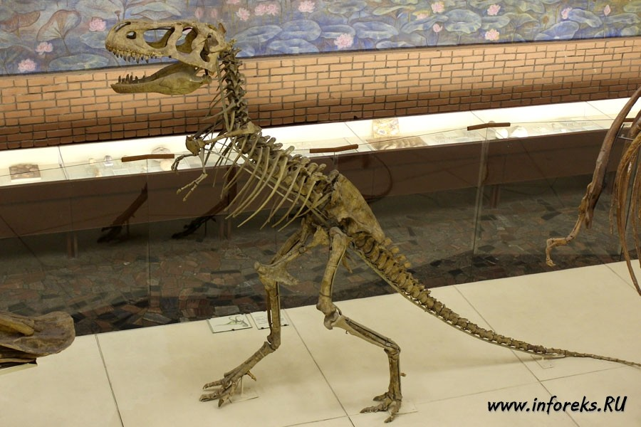 Палеонтологический музей в Москве 13
