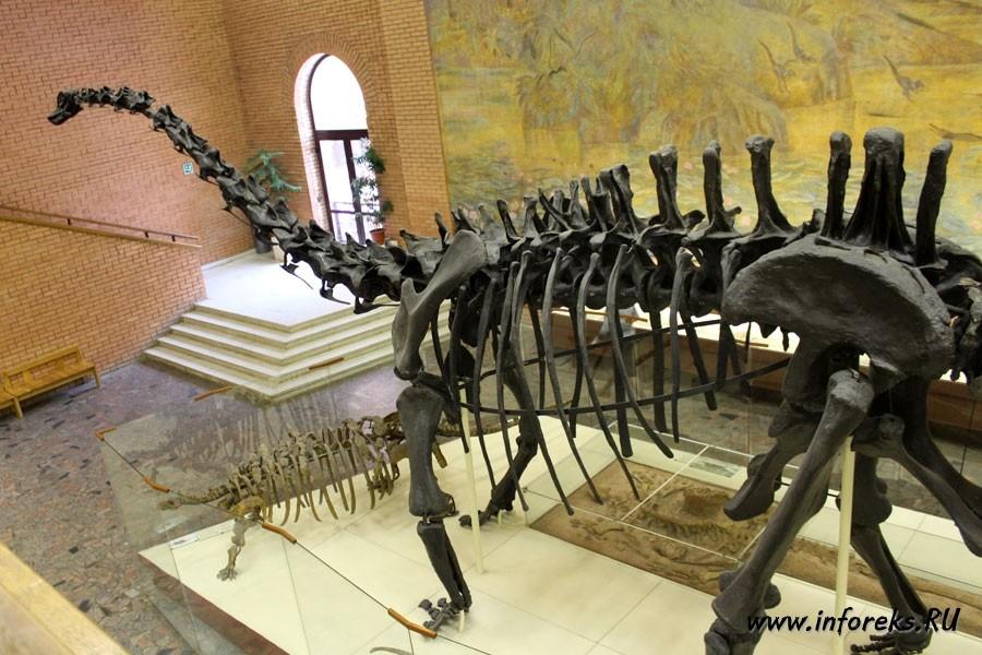 Палеонтологический музей в Москве 15