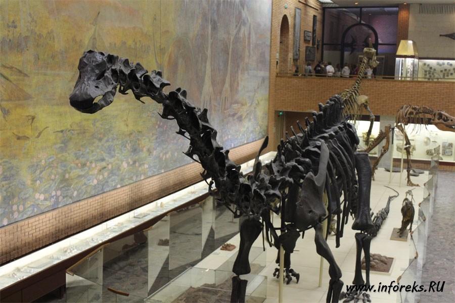 Палеонтологический музей в Москве 17