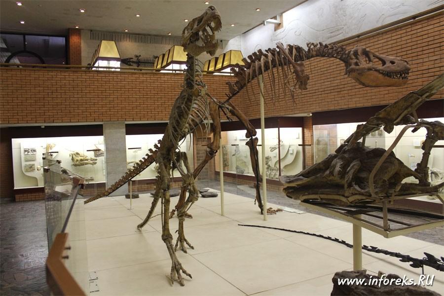 Палеонтологический музей в Москве 11