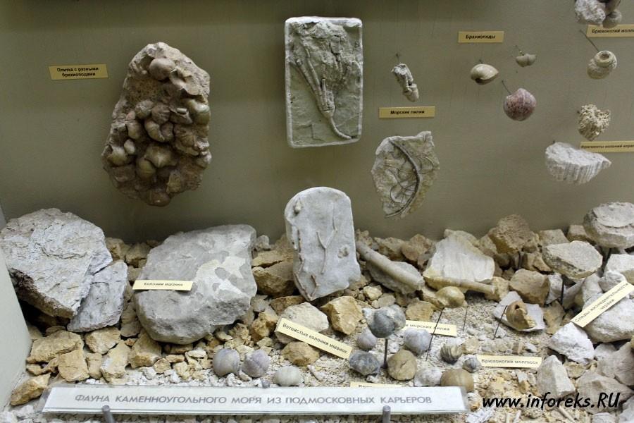 Палеонтологический музей в Москве 7