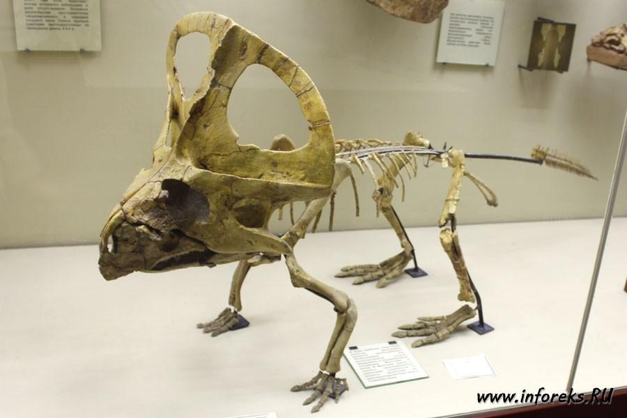 Палеонтологический музей в Москве 5